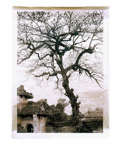 """Temple Tree, Hien Lam Pavilion, Imperial City, Hue, Vietnam 46 x 34"""""""