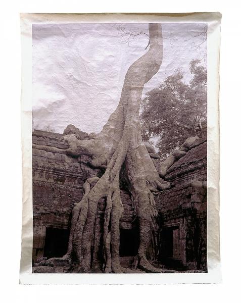 "Spong Tree, Ta Prohm, Siem Riep, Cambodia 46 x 34"""