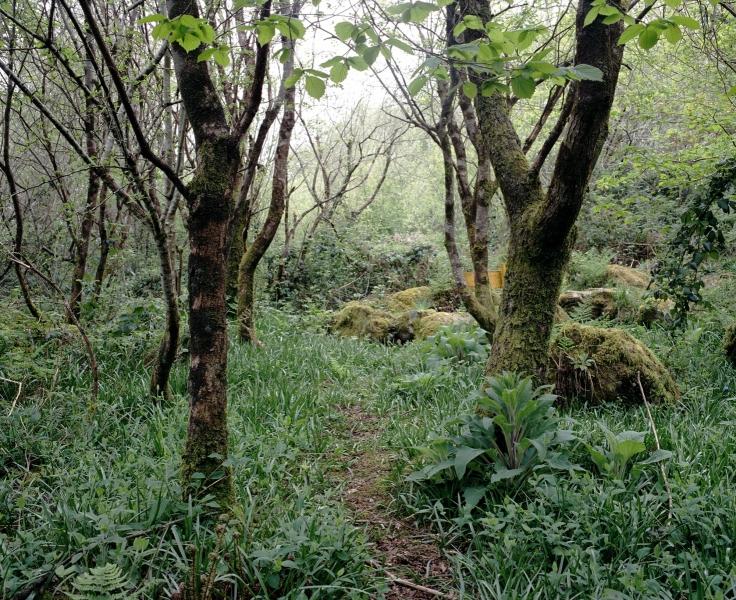 FAMINE GRAVE FOREST, NEAR BALLEYVORNEY, IRELAND 2006